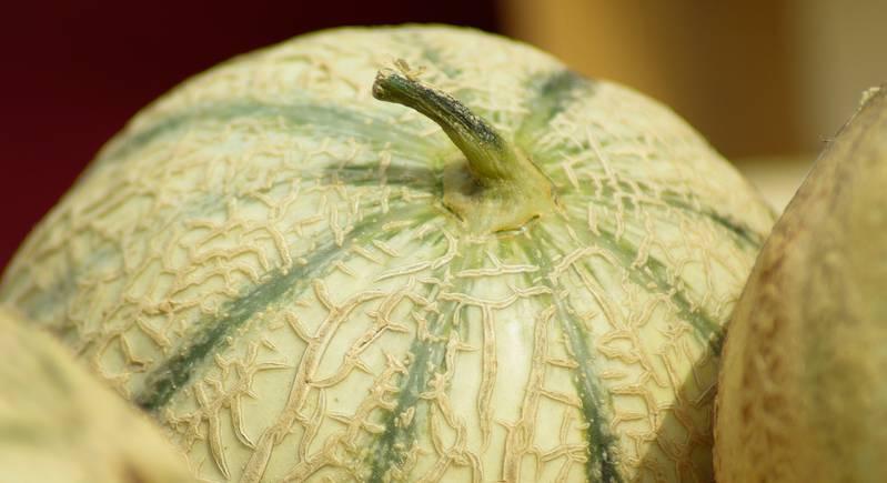 Melons du marché