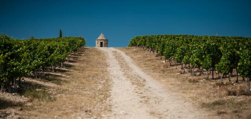 Vigne du Chateau Eugénie à Albas © Lot Tourisme - C. ORY